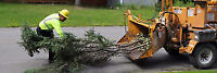 Contact Us First. Front Yard Tree Removal. BEST PRICE GTA.