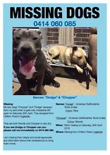Missing dogs Ingleside Warringah Area Preview