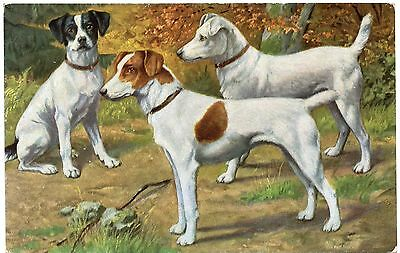 SMOOTH FOX TERRIER THREE DOGS OLD DOG ART POSTCARD