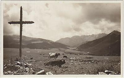 CANALE S.BOVO - DINTORNI - MALGHE E PASCOLI AL PASSO BROCCONE (TRENTO) 1942