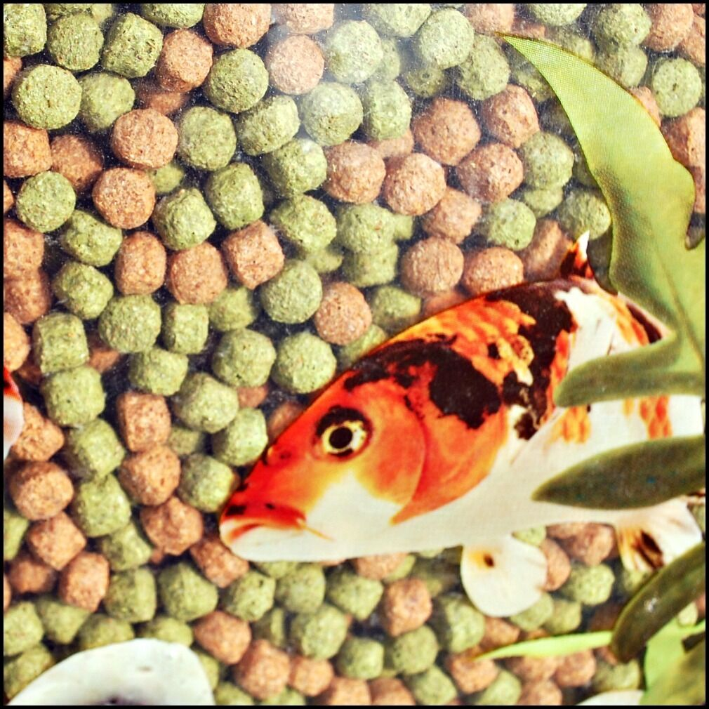 30kg webbox rainbow pellets koi carp pond fish food for Pond fish food