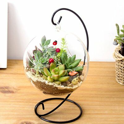 Home Garden Clear Glass Flower Hanging Vase Planter Terrarium Container +Bracket](Hanging Glass Terrarium Containers)