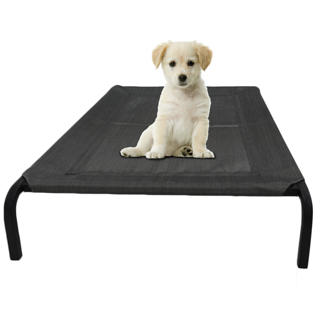Large Dog Bed Dimensions