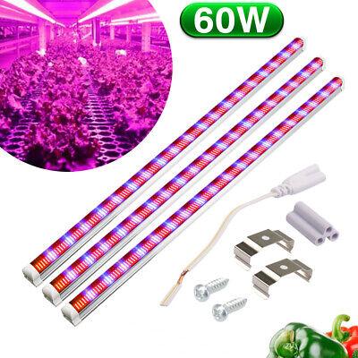3 Stück 45W 60W LED Wachsen Licht Vollesspektrum T8-Rohre für Gewächshaus Lampe (T8 Led Wachsen)