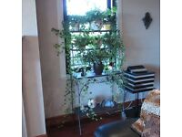 Black wrought iron Baker Rack/Plant Stand complete with plants and plant pots