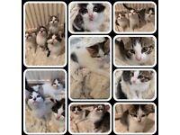 Boy & Girl Kittens