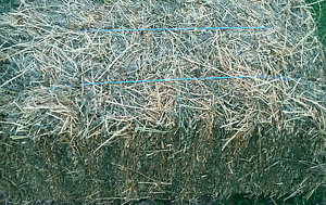 Quality Hay Deception Bay Caboolture Area Preview