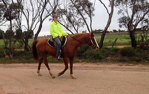 Stunning Quarab mare 14.2hh 10y Swan Hill Swan Hill Area Preview