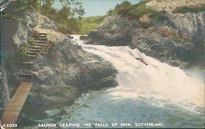 Salmon leaping the falls of shin JB white