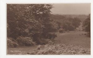 Near Lyndhurst, In The New Forest, Judges 4744 Postcard, A920