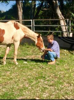Stuart Clunes Equine Training And Educating
