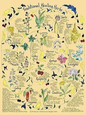 "Traditional Healing Herbs Watercolor Printed Botanical Poster 18"" x 24"""