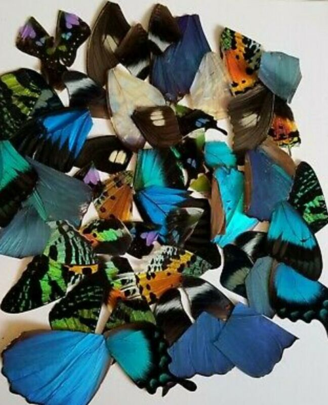 50 pieces assorted Real butterfly wings for craft