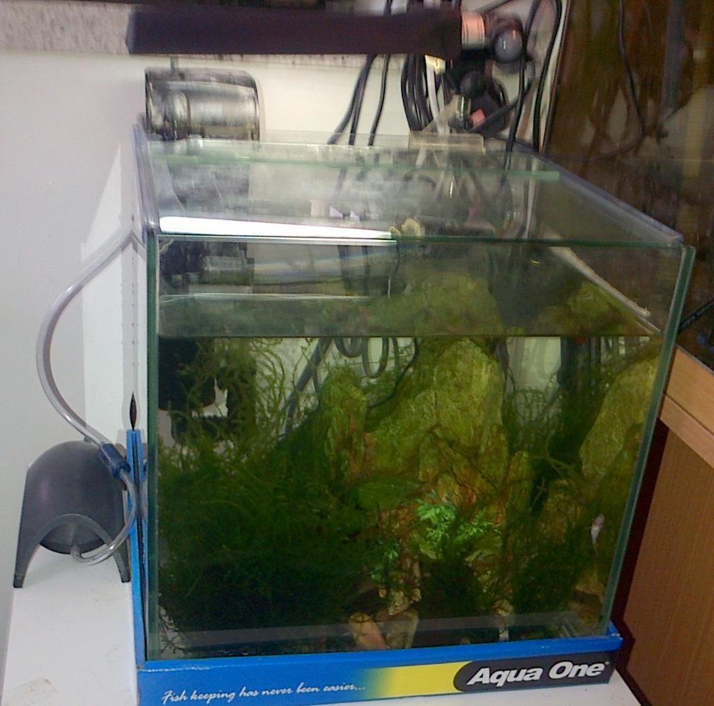 Fish tank set up in mablethorpe lincolnshire gumtree for Fish tank set