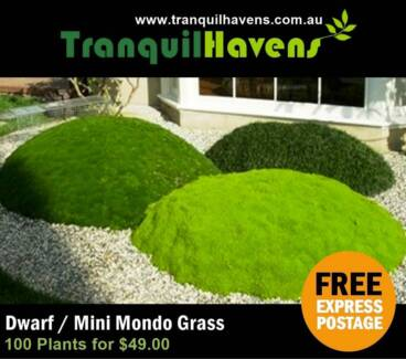 Dwarf ⁄ Mini Mondo Grass - 100 Plants for $49.00 Express delivery