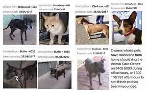 Found pets WANNEROO shire areas  Yanchep, Quinns etc Wanneroo Area Preview