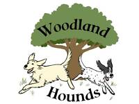 Spaces available at Woodland Hounds dog daycare