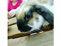 2 rabbits in need of a GOOD home