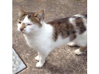 Female, neutered, white and tortoiseshell cat looking for new home