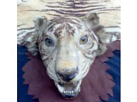 A LATE VICTORIAN TAXIDERMY TIGER SKIN..