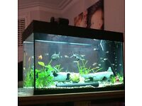 Juwel 125L aquarium fish tank with everything needed to get started.