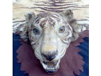 AN EARLY 20th CENTURY TAXIDERMY OF A SIBERIAN TIGER.