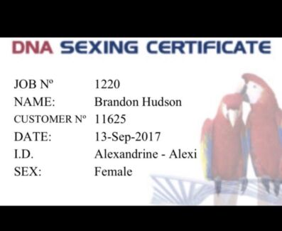 Dna Sexing test for your bird