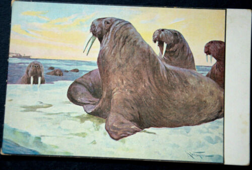 48294 Ak Sea Lion Seelöwen On Ice Floe Background Ship