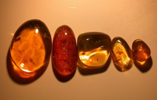 5 Pieces of Authentic Dominican Amber Fossils with Variety of Insects, Spider