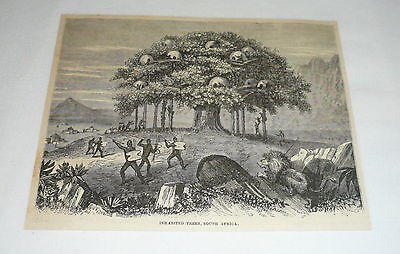 1878 magazine engraving ~ NATIVES OF AFRICA LIVING IN TREES
