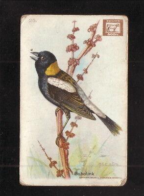 Bobolink  1922 Church   Dwight Useful Birds Of America Card