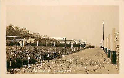 1910 1930 Real Photo Postcard  Clearfield Nursery  Tree Farm  Clearfield Pa