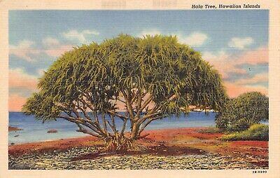 Hala Tree Hawaii Hawaiian Islands linen postcard