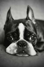 Dog boarding & daycare (City) Chippendale Inner Sydney Preview