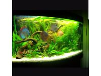 Fish tank Juwel vision 180 with led light and stand