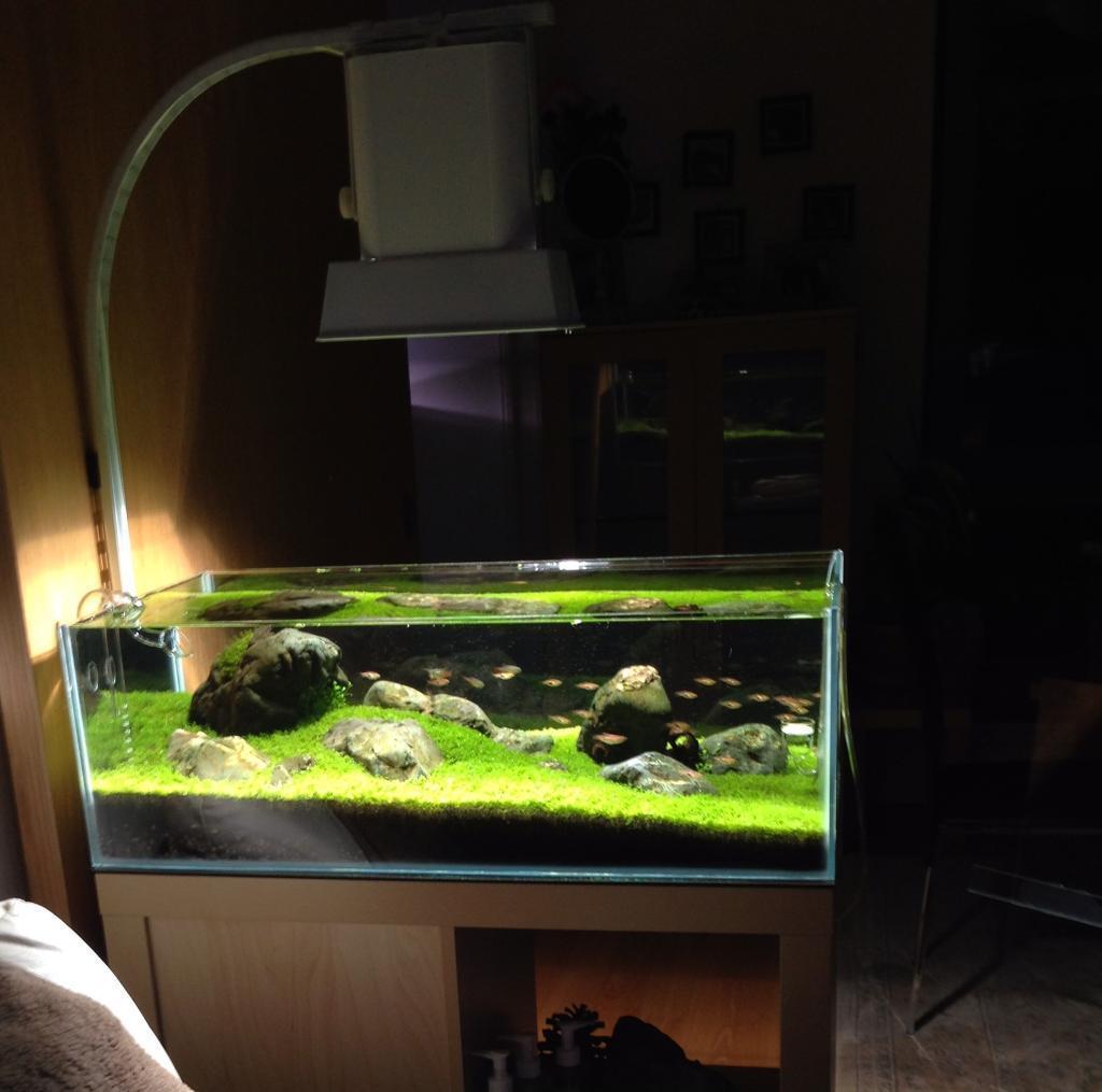 Aquascape Aquarium Set With Stand In Edinburgh Gumtree External Filter
