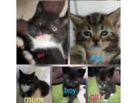 Lovely cats for sales