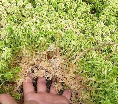 Gallon Bag LIVE ORGANIC SPHAGNUM MOSS TERRARIUM VIVARIUM Frog  Bogs Garden