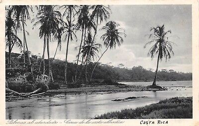 Palm Costa Rica (COSTA RICA, PALM TREES AT SUNSET NEAR THE COUNTRY'S ATLANTIC COAST, used 1940)