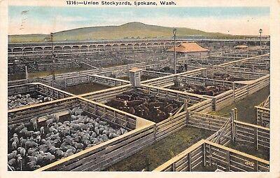 Union Stockyards (Spokane Washington~Union Stockyards~Cattle in Pens~1925 Postcard)