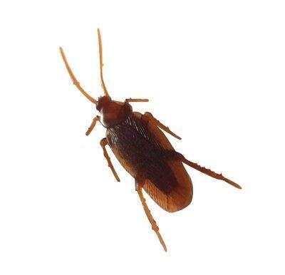 1 x scarafaggio bug scherzo divertente scherzo giocattolo novità trucco falsa vi