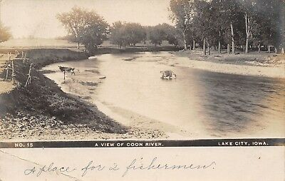 Lake City Iowa Cattle In Coon River Cow On Bank Place For 2 Fishermen 1907 Rppc