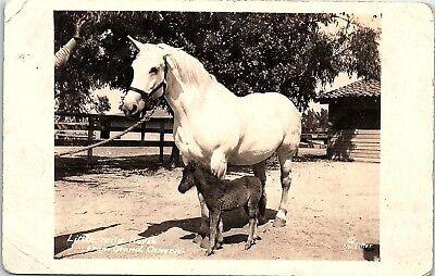 RPPC AZ Grand Canyon Little Wild Horse Real Photo Postcard X1