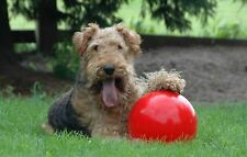 Boomer Ball Indestructible Solid Dog Toy 4 6 8 10 inch – RED OR BLUE