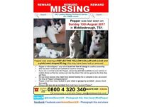 Pepper is missing from Middlesbrough TS1