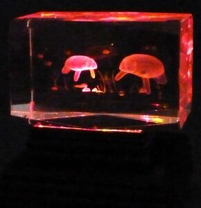 Laser Etched 3D Crystal & Light Base MANATEES Sea Cows