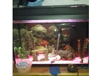 2ft tropical fish tank and fish for sale