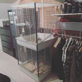 Very large chinchilla/rat/degu cage