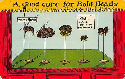Comic~Good Cure For Bald Heads~Toupee Wigs on Stands in Window~Not Dog Hair~1909 - Wig On Dog