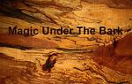 Magic Under The Bark